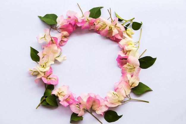 아시아의 부겐빌레아 식물 지역 꽃