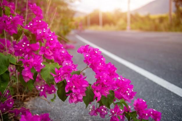 Цветы бугенвиллии или бумажные цветы.