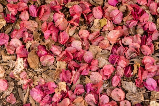 床にブーゲンビリアのマグノリオ植物