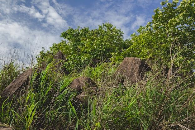 Валуны и деревья с голубым небом на заднем плане