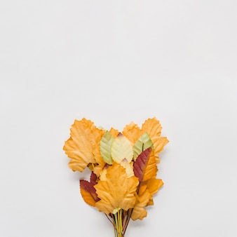 Bouquet of autumn leaves on white background