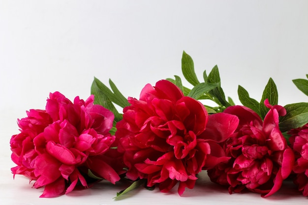 Bouquet beautiful bright pink flowers peonies on a light background. close-up