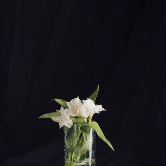 Bouquet of beautiful fresh white flowers in vase