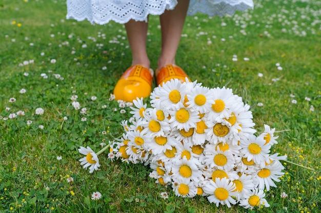 Bouquet beautiful white daisies in summer garden chamomiles in green grass