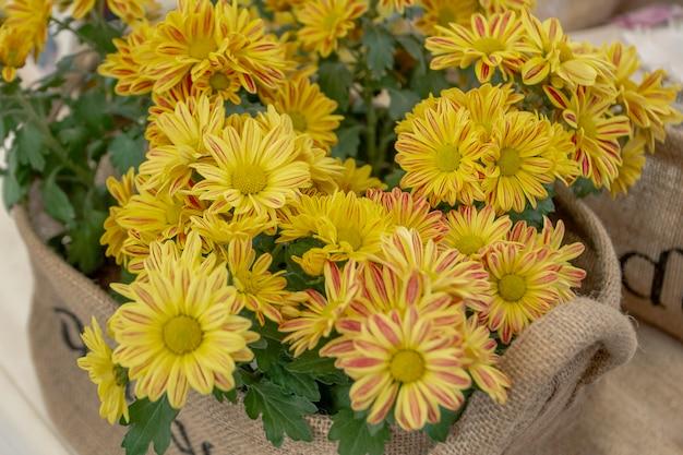 A bouquet of beautiful yellow chrysanthemum flowers
