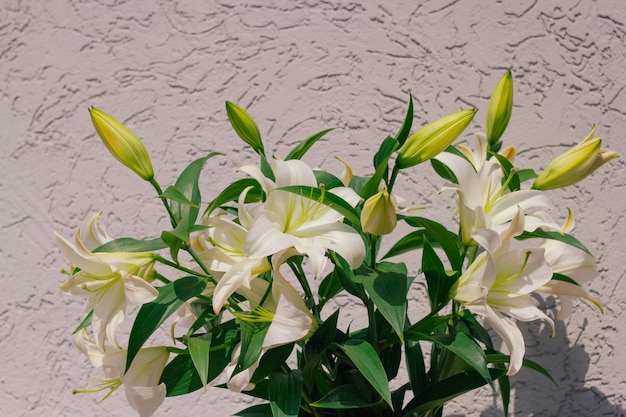 Bouquet of blooming lilies in front of a grey shabby concrete wall