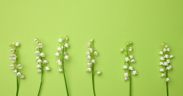 Bouquet of blooming lilies of the valley on a green background, top view. beautiful background for greeting card