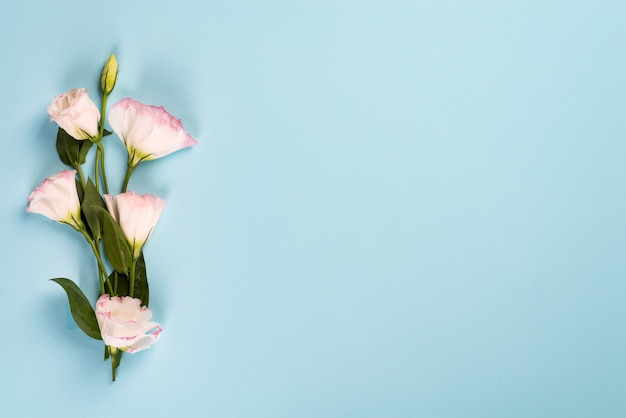 Bouquet blooming pink eustoma on blue background, flat lay. valentines day, birthday, mother or wedding greeting card
