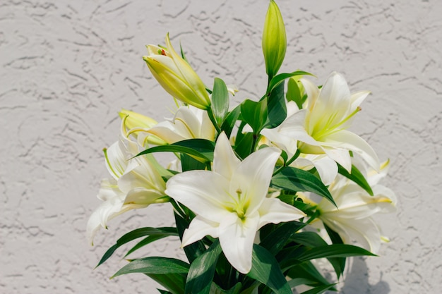 Bouquet of blooming white lilies in front of a grey shabby wall