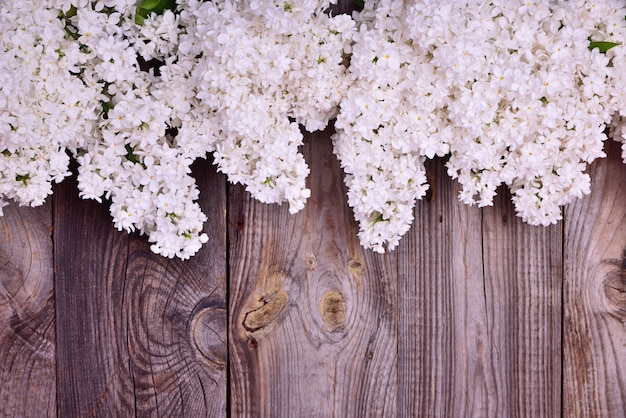 Bouquet of blossoming white lilacs on a gray wooden surface