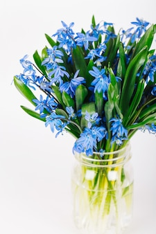 Bouquet of blue spring flowers on white background. copy spase