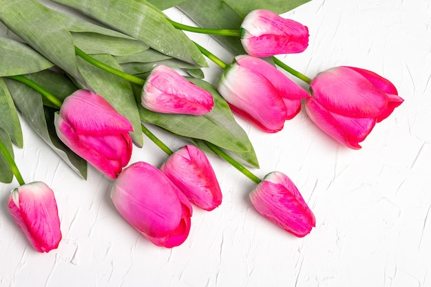 Bouquet of bright pink tulips on white plaster background