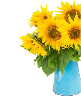Bouquet of bright sunflowers in blue pot close up isolated on whute