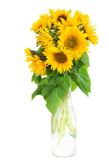 Bouquet of bright sunflowers in bottle isolated on whute