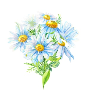 Bouquet of camomile. abstract flower for decoration design. watercolor floral illustration. summer field herb.