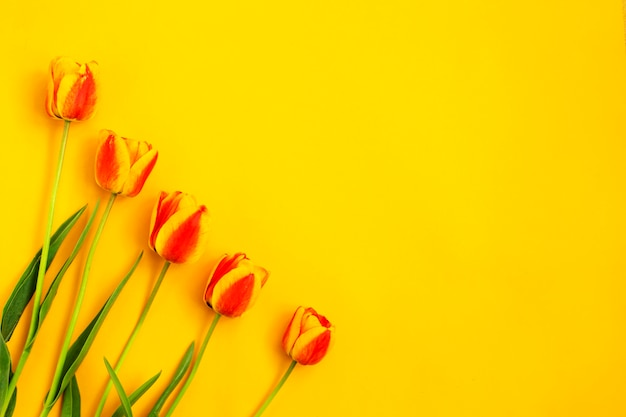 Bouquet of color spring tulips on yellow background. spring flowers. easter, valentines, 8 march, happy birthday, holidays concept. copy space