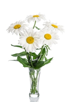 Bouquet of daisies in glass vase on white background