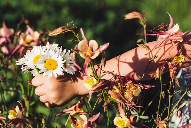 Bouquet of daisies in hand of child against of aquilegia. girl with marguerites. interaction of human and nature. background image of flowers and baby hand.