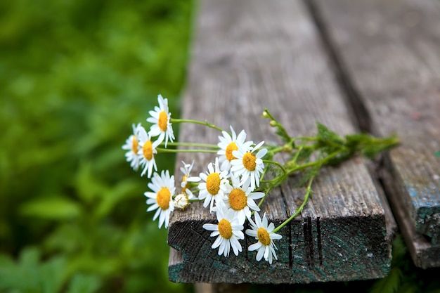 Bouquet of daisies on an old wooden bench.rural still life