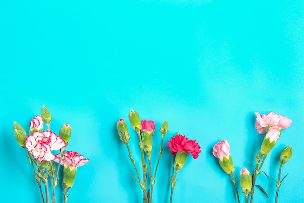 Bouquet of different pink carnation flowers on blue colorful background