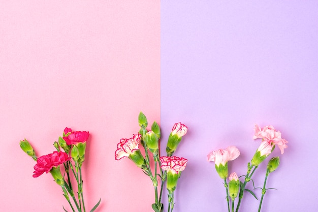 Bouquet of different pink carnation flowers on double colorful background