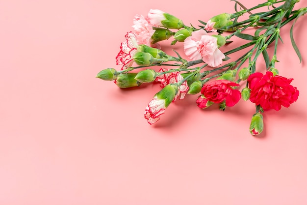 Bouquet of different pink carnation flowers on pink background