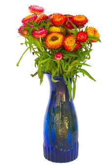 Bouquet of everlasting flowers bouquet in vase  isolated on white background