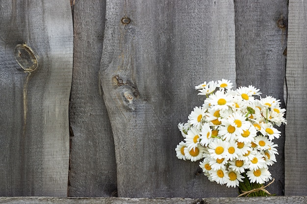 Bouquet field chamomile flowers in fence on old wooden background.