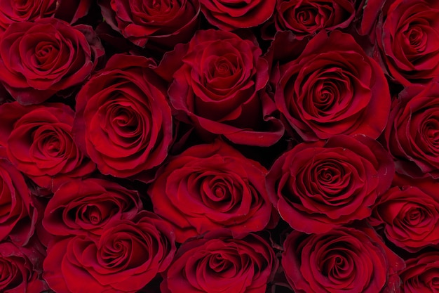 Bouquet of flowers: fresh red roses
