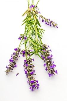 Bouquet of flowers and lavender seeds and green rosemary on white