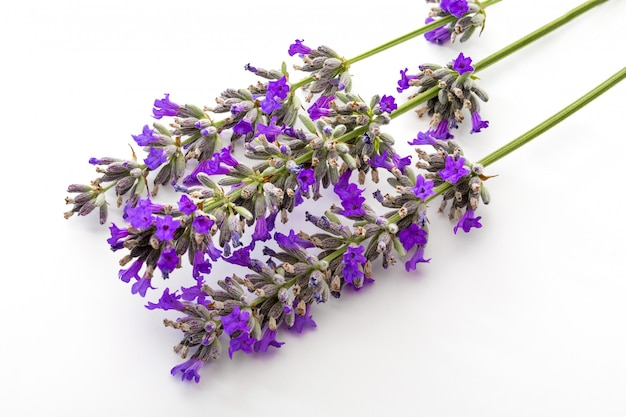 Bouquet of flowers and lavender seeds on white
