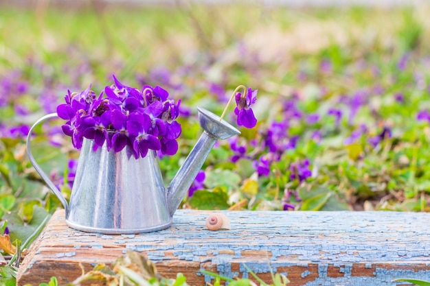 Bouquet of forest flowers violets in a tin watering can on a blue wooden retro board on a meadow