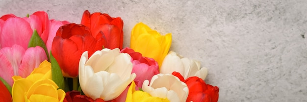 A bouquet of fresh, bright, multi-colored tulips on a light gray background.