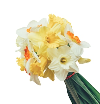A bouquet of fresh flowers daffodils isolated