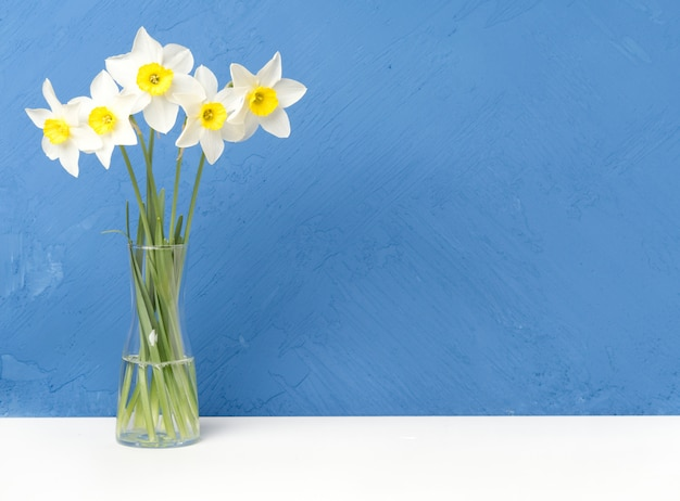 Bouquet of fresh flowers, daffodils with glass vase on white table, blue wall