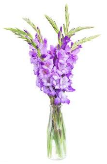Bouquet of  fresh gladiolus flowers in vase isolated on white background