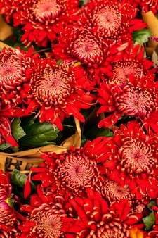 Bouquet of fresh red chrysanthemums