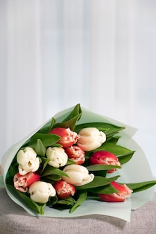 Bouquet of fresh tulips red and white color on gray armchair near tulled window in home interior