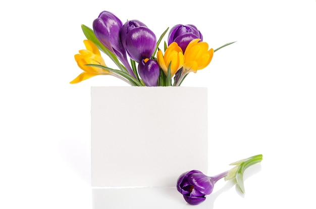 Bouquet from crocus flowers Premium Photo