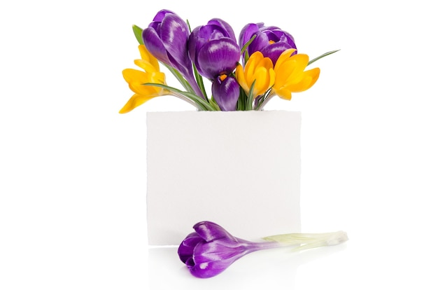 Bouquet from crocus flowers
