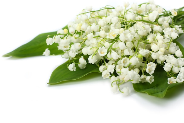 Bouquet from lilies of the valley on the isolated white background