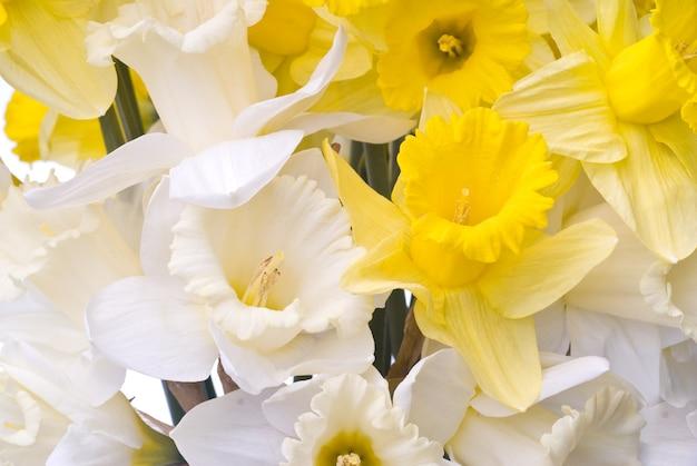 白と黄色の水仙からの花束