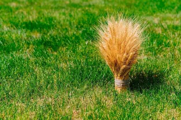Bouquet of golden wheat ears on green grass