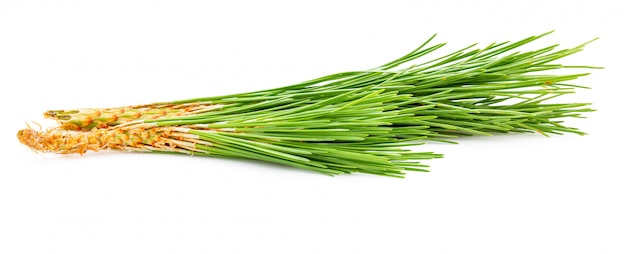 Bouquet of green leaves of wild pine.