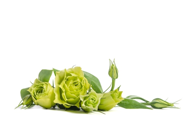 Bouquet of green roses lying
