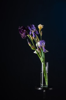 Bouquet of irises in a glass vase on a dark blue background