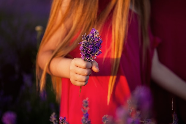 Bouquet of lavender flowers in the hand of a child