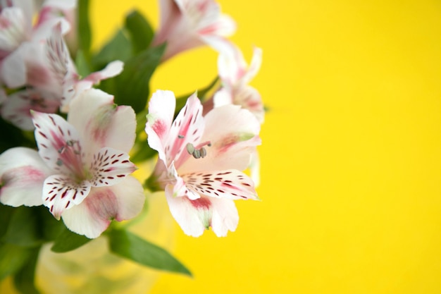 Bouquet of light pink astromeria on  yellow