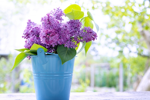 Bouquet of lilac branches in blue bucket.