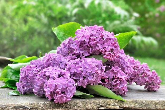 Bouquet of lilac